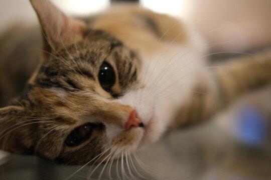 上目遣いが上手な猫