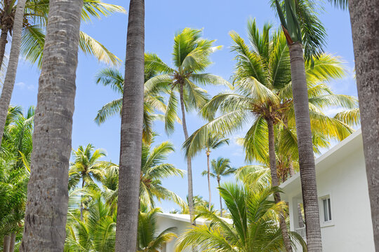 View from balcony on top palms trees, tropical flora in garden
