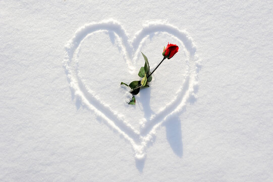 heart shape scarfed in snow with red rose