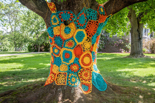 Crochet for Trees Close Up in Morgantown West Virginia