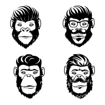 Cool monkeys logo design.Vector illustration isolated on white background