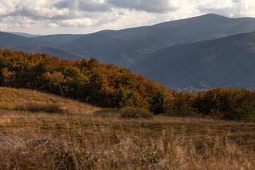 Jesienny krajobraz górskich szczytów wraz z kolorowym lasem na pierwszym planie, Bieszczady, Polska