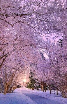 Sun Glowing Through A Snowy Treelined Park