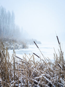 Snowflakes in winter on the reeds of the lake Neusiedlersee