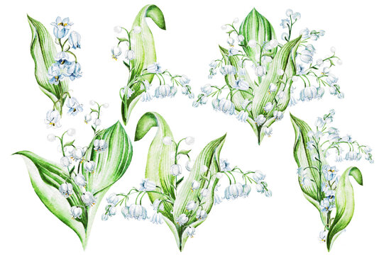 Lilies of the valley. Watercolor hand drawn illustration.