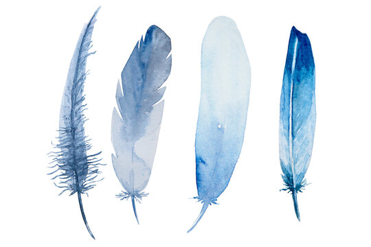 Set of watercolor blue feathers on white background. Bird's feather. Variegated feather.
