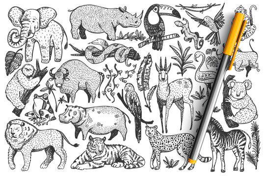 Animals doodle set. Collection of funny hand drawn cute wild african safari mammals isolated on white background. Illustration of leopard lion snakes monkey zebra giraffe elephant for kids.
