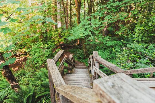 Boardwalk hiking trail through the forest, Oregon