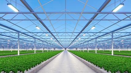 Fototapeta Big industrial greenhouse interior. Hydroponic indoor vegetable plant factory. Green salad farm. Concrete floor. 3D render obraz