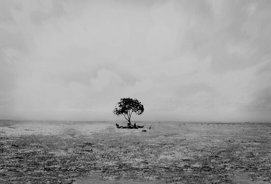 Lone Tree On Field Against Sky