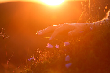 Cropped Hand Of Woman Touching Flower During Sunset
