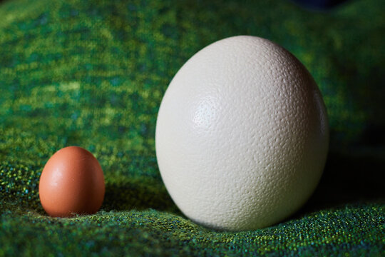 An Ostrich egg next to a hen egg in comparison, on green background