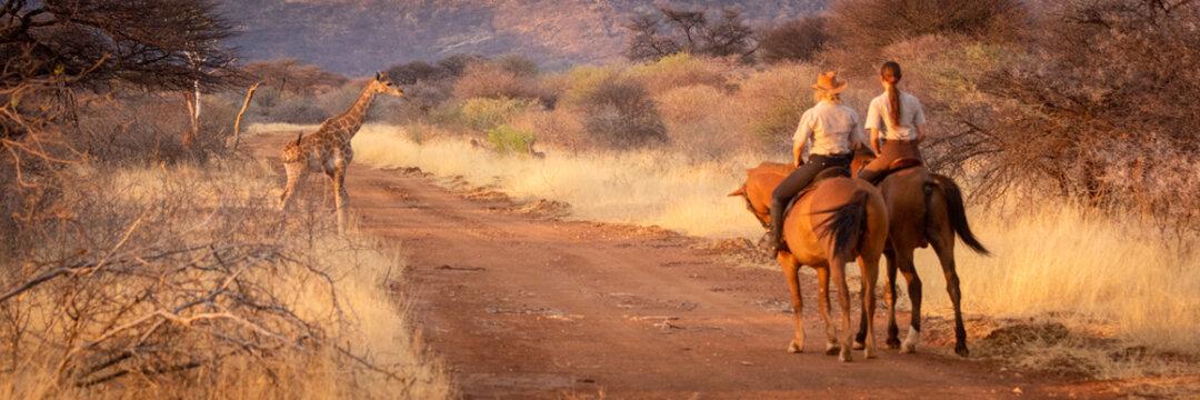 Panorama of women on horseback watching giraffe
