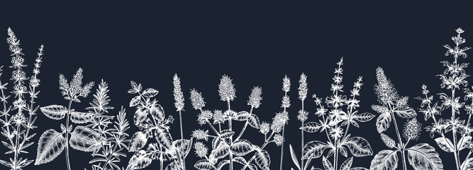 Fototapeta Mints on chalkboard. Hand drawn medicinal herbs banner design. Vector mint plants sketches. Vintage summer herbs template.  obraz