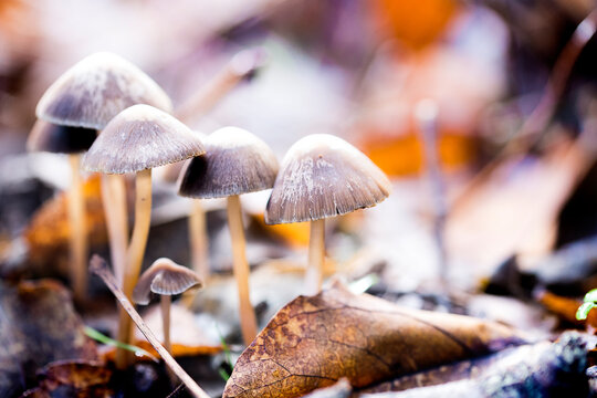 Grupo de setas en el bosque