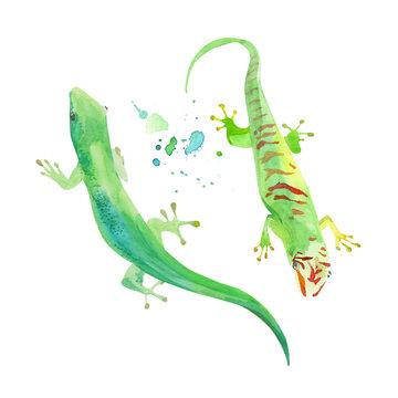 Gecko watercolor illustration, vector template. Green exotic lizard. Iguana, tropical leopard reptile icon.