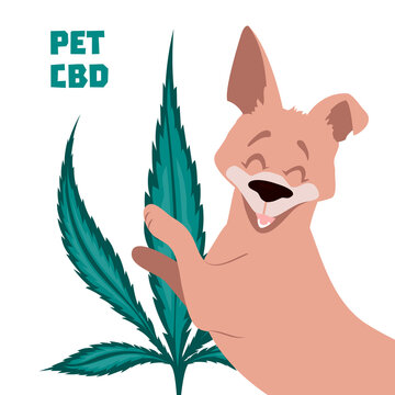 CBD calming dog treats poster with hemp leaf in the background. Cannabidiol oil for anxiety treatment in pets. Medical marijuana remedy for happy domestic animals. Vector illustration.