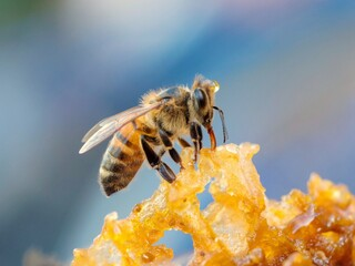 Fototapeta Close-up Of Bee Pollinating On Flower obraz