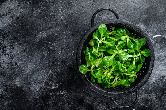 Fresh green Corn salad leaves, lambs lettuce in a colander. Black background. Top view. Copy space