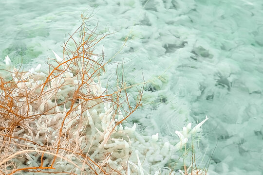 many orange branches overgrown with salt, the salt coast of the dead sea in israel, the texture of salt on the beach.