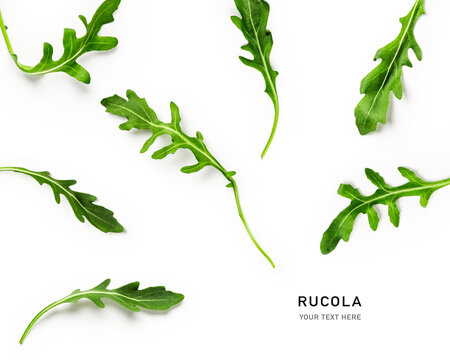 Rucola leaves collection and creative layout.