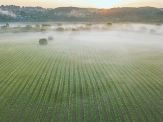 High Angle View Of Agricultural Field During Foggy Weather