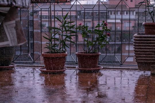 Rainy Day On My Balcony