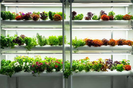 Growing medicinal plants in a greenhouse. Laboratory greenhouse. Greenhouse in a biological laboratory. Multicolored plants on white shelves. Concept - growing herbs and flowers for research.