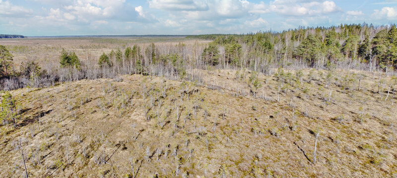 panorama of peat swamp under sky with clowds