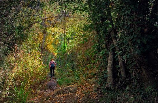 Walk through the forest in autumn