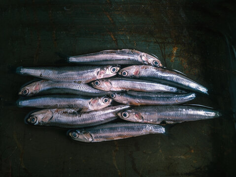 Top view of a bunch of anchovies