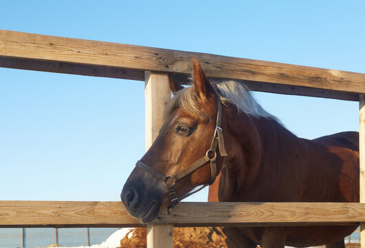 Horse looking through the wooden fence of the paddock - selective focus image
