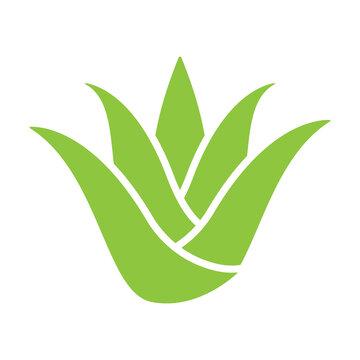 green aloe vera icon vector