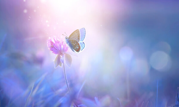 Butterfly on clover flower in spring in summer in rays of transparent violet light, soft focus macro. Aerial refined subtle gentle exquisite artistic image beauty of nature.