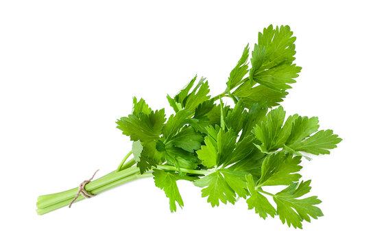 Green celery bunch