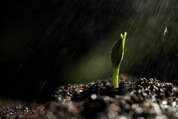 Sprinkling water on green seedling growing in soil, closeup