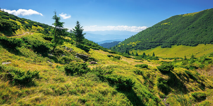 mountain landscape on a summer day. trees on the grassy hill. scenery rolling down the valley in to the distant view. blue with fluffy clouds above the black ridge. wonderful adventures in carpathians
