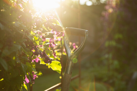 Shovel next to blooming purple plant in sunny idyllic summer garden