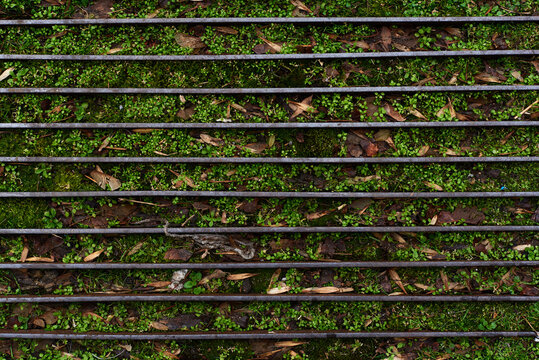 Green weeds growing through metal frame footpath summer autumn spring concept nature with copy space for text