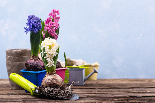 Spring gardening concept with blooming flowers
