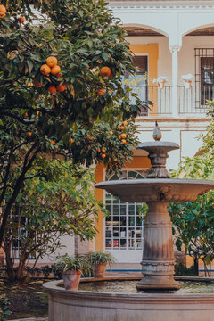 Seville, Spain - January 19, 2020:  Fountain by orange trees in the gardens of Alcazar of Seville palace, Spain.