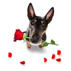 dog valentines love heart