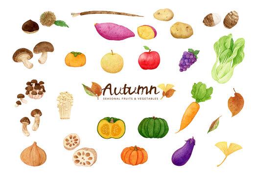 Watercolor Autumn vegetables set. pumpkin, sweet potato, apples, burdock, mushroom, lotus root, carrot and more. Hand drawn illustration