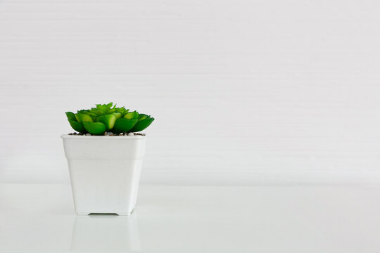 Succulent plant in pot on white table.