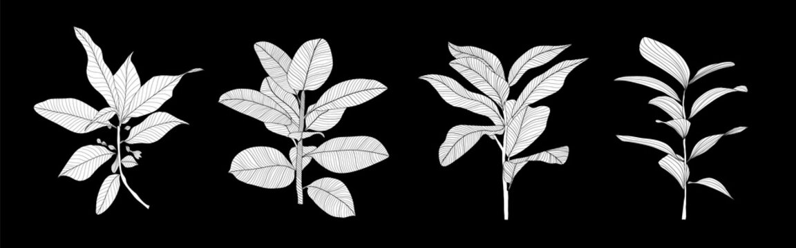Background with plants and leaves. Botanical  minimal wallpaper design. vector illustration.