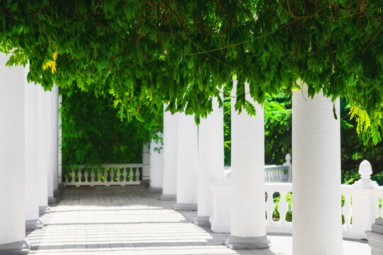 White colonnade with green plants in the park. Summer nature background