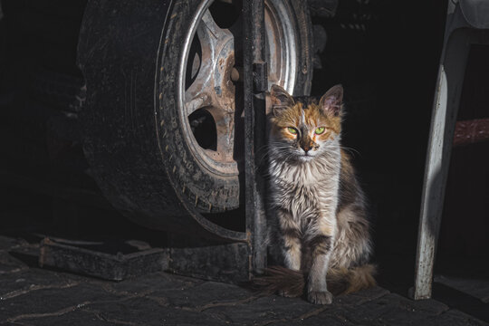 Portrait of a tough looking urban street cat in Marrakesh, Morocco lurking in the shadows.