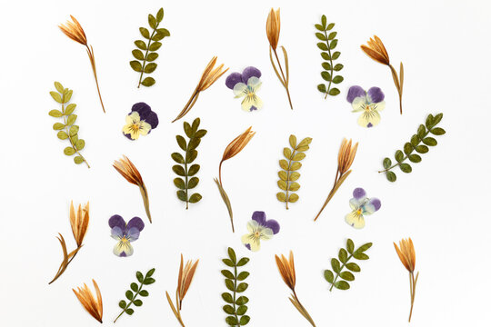 Natural dried flowers pattern on white bakground