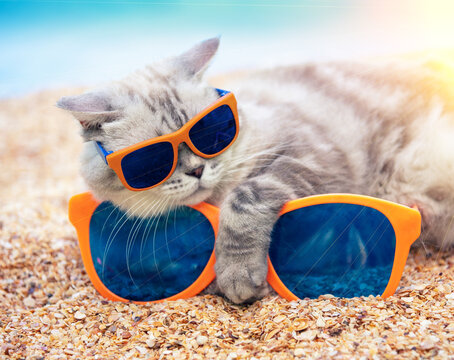 Siamese cat in sunglasses lying with its paw on large sunglasses on the beach. The cat is enjoying the summer. Vacation concept