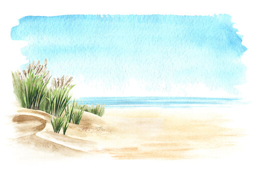 Coastal dune, sea grass, beach on the background of the sea with copy space. Hand drawn watercolor illustration,  isolated on white background